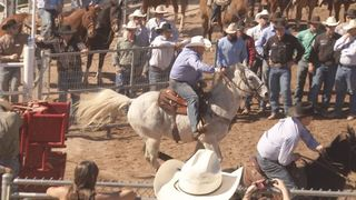 Deadly horse herpes hits AZ before Tucson Rodeo