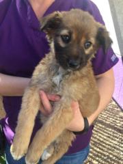 Twelve Puppies Abandoned Near Bisbee Kgun9 Com