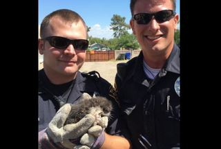 TPD officers find kittens under shed