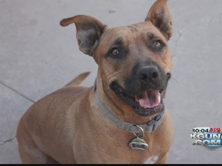 Two dogs killed in bee attack in Rita Ranch