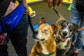 Blind dog and his buddy up for adoption at PACC