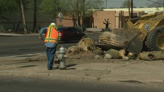 Huge Saguaro cut down on Broadway