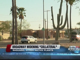 Broadway widening threatens protected plant life