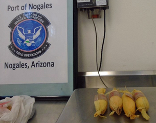 CBP seizes drugs disguised as tamales, pavers