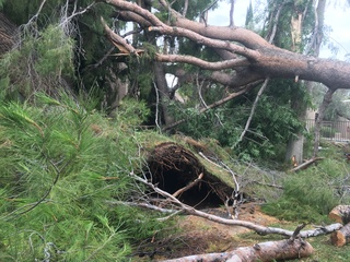Monsoon storm toppled trees and broke windows