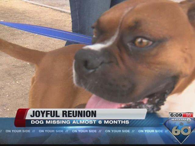 Stolen dog found six months later