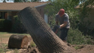 Tree cleaning services clean up Monsoon damage