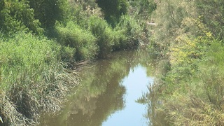Santa Cruz River has clear water and new species