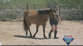 Horse who suffered abuse now battling cancer