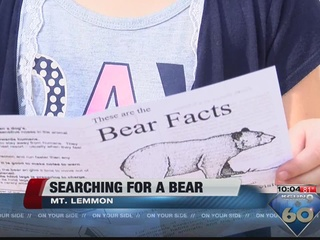 A bear is causing problems on Mt. Lemmon