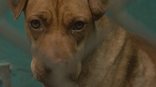 Preventing animal cruelty in Southern Arizona