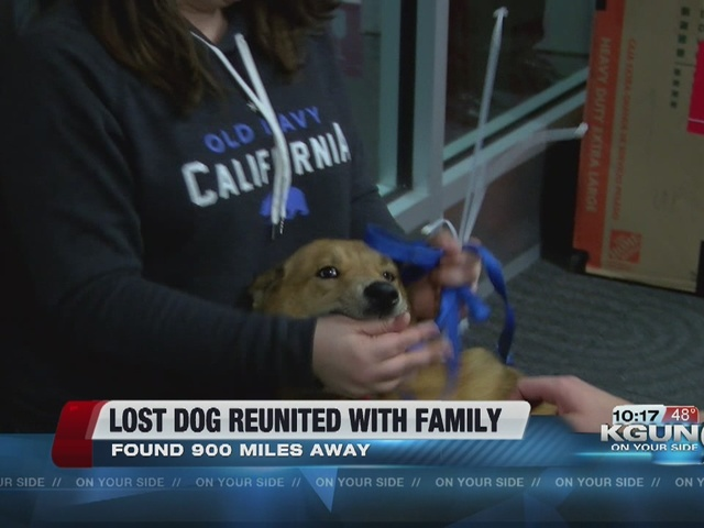 Lost dog reunited with family in Tucson