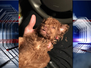 Puppy found buried alive dies