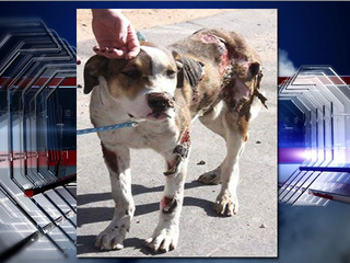 Reward offered for info on dog that was abused