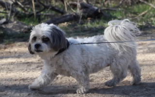 Dog-friendly hikes in Tucson