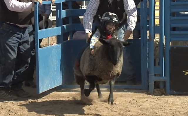 The Tucson Rodeo is coming to town