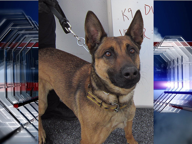 CBP searching for missing K9 Dunja