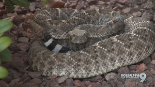 Rattlesnake season comes early due to temps