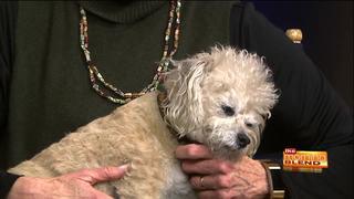 Doggie Shorts Furry Film Fest