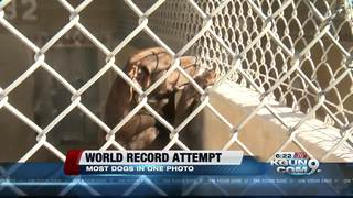 HSSAZ attempting to break world record