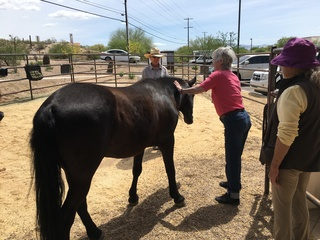 Senior living community offers horse program