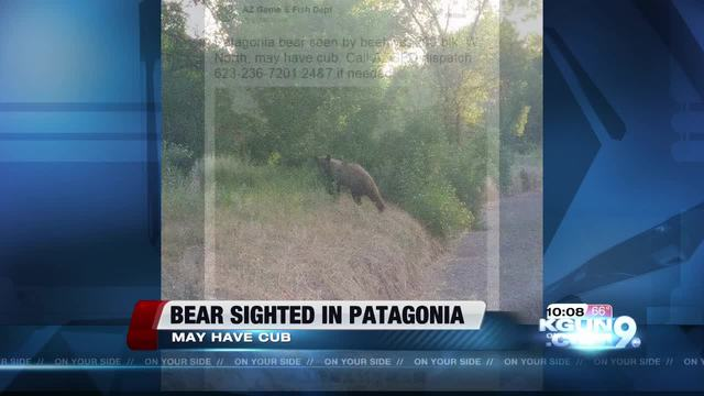 Bear spotted near patagonia for Fish and game office near me