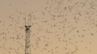 Watch thousands of bats take flight in Tucson