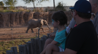 Visit Reid Park Zoo's Summer Safari Nights