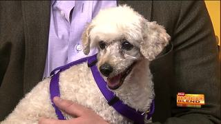 Pima Paws for LIfe in need of donations