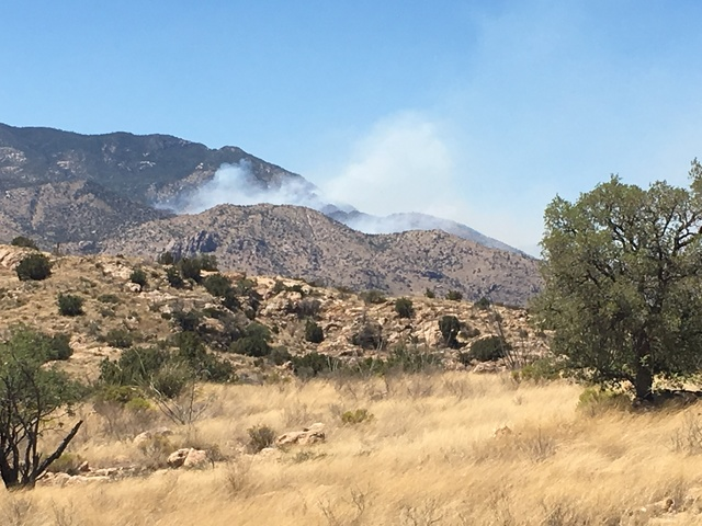 Burro Fire near Tucson closes road to Mt. Lemmon, evacuations begin