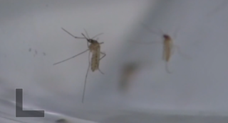 PROTECT YOUR HOME: Mosquito prevention in Tucson
