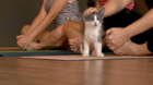 Donate to HSSAZ by doing yoga, with kittens
