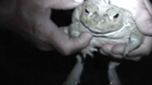 Protect your pet against poisonous toads