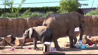 Nandi the elephant is turning 3-years-old