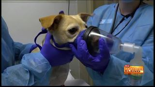 Dog flu prevention on National Dog Day