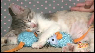 Are you thinking of adopting a cat? Watch this!