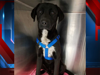 Dog found hanging from tree in Tucson