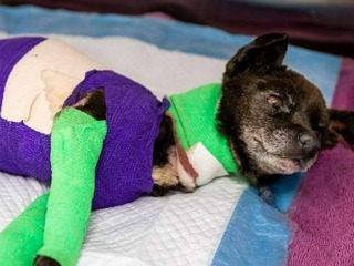 PD: Dog dies after being set on fire in Tucson