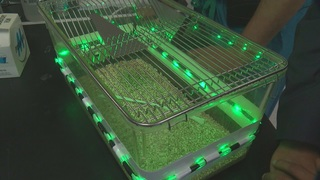 Researchers continue green light therapy study