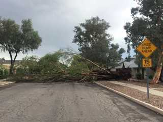 Fallen tree blocks 14th Ave.