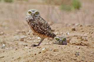 GALLERY: International Owl Awareness Day