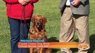 Weekend events: El Tour de Tucson to Dog Shows