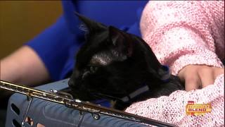 Your chance to save at-risk pets here in Tucson