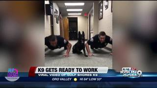 K9 push-up video goes viral