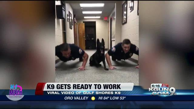 K9 does push-ups with officers