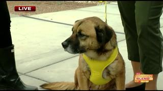 Puppies and free pizza at HSSAZ Pledge for Pets