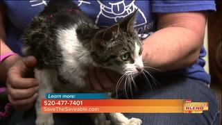 Save the Saveable: Senior cats make great pets