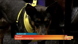Shop and help homeless pets with Humane Society