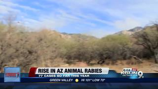 AZ Health officials warn about a rise in rabies