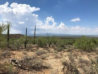 Touring the Arizona-SonoraDesert Museum